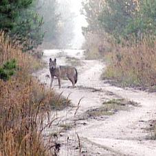 wolf2002.jpg